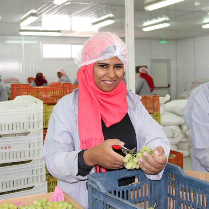 Feed the Future Egypt Rural Agribusiness Strengthening Project