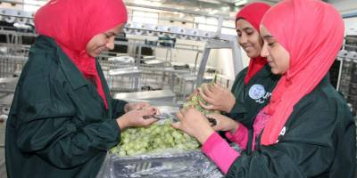 Feed The Future Egypt Food Security And Agribusiness Support